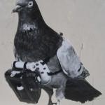 Pigeon photographers