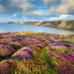 """The photographs from the Seventh annual International competition """"Garden photographer of the Year"""""""