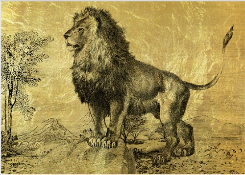 Strong, brave the king of beasts lion. And so it looks in this golden picture
