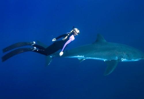 Ocean Ramsey beautiful girl swimming with sharks