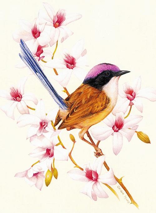Colorful Birds by Deirdre Hunt