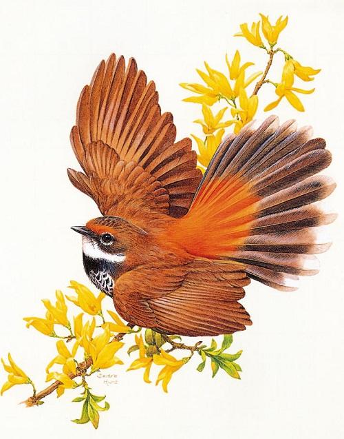 Australiana Bird cards