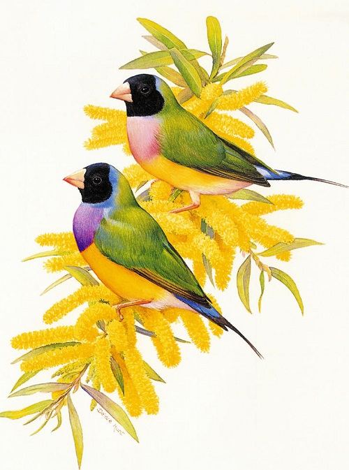 Australiana Bird cards