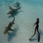 Ocean Ramsey freedives with lemon sharks in the Bahamas