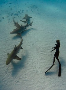 Ocean Ramsey freedives with lemon sharks in the Bahamas
