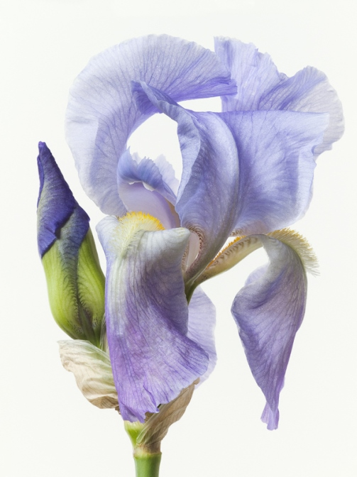 Paul Lange's beautiful photographs of flowers