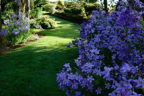 Beautiful garden Maple Glen, New Zealand