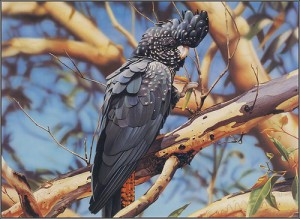 Hyperrealistic paintings of wildlife by Ego Guiotto