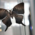 Madeleine Albright's butterfly pin, on display at the Museum of Arts and Design in September, 2009