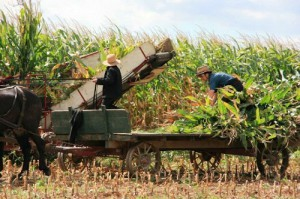 Amish community farm work