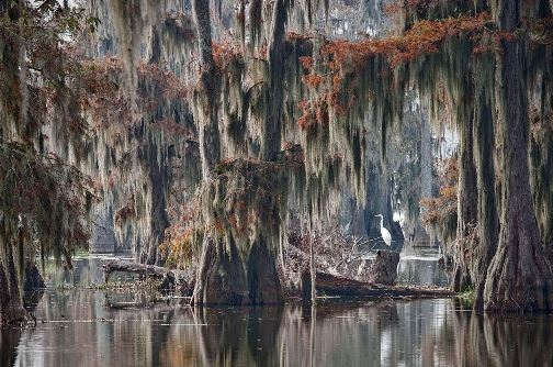 Caddo Lake with world largest Cypress forest