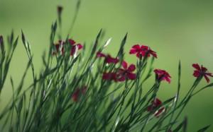 Flower language