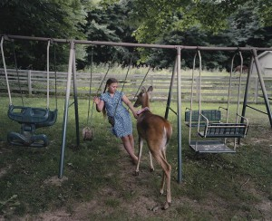 Curious kenguru