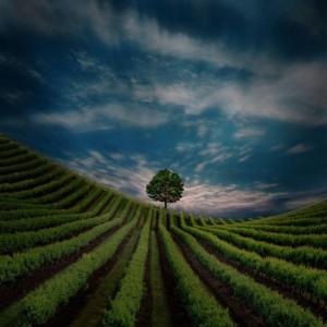 Beautiful landscape photography by Kittiwut Chuamrassamee