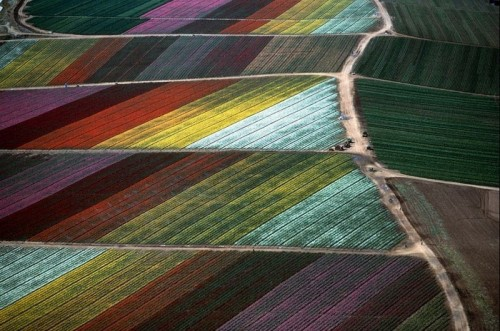 Fields in California, 1989. Aerial photographs of Alex MacLean