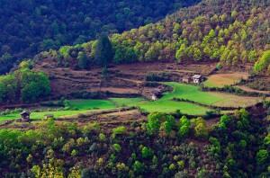 Green dictatorship in Bhutan.