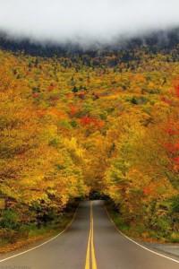 Tunnel of autumn trees, USA