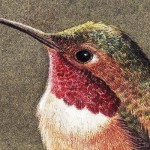 Close up of the head of the Hummingbird. Johan painted this animal about lifesize. It's the Allen's hummingbird.