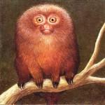 'Marmoset', the smallest primate, oil on hardboard