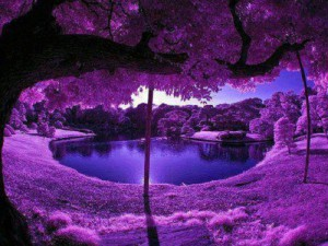 Purple Scenery at a Japanese Garden