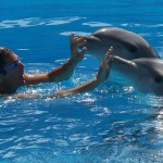 Raoul Bova with dolphins