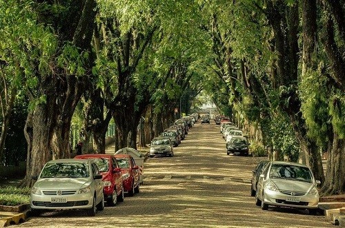 Most beautiful tunnels of trees in the world