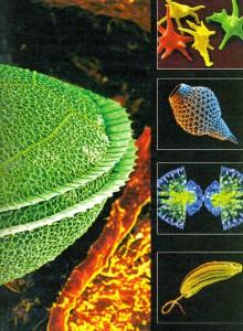 Unicellular organisms colorful kingdom