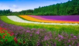 colorful Japan