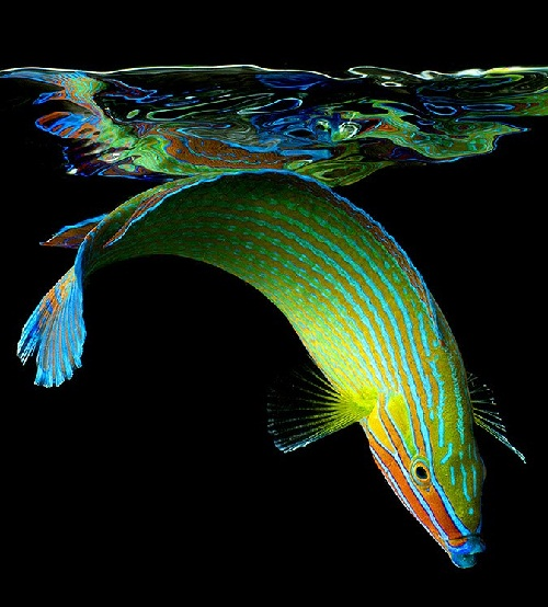 The beautiful underwater creatures in colorful neon photography of Mark Laita