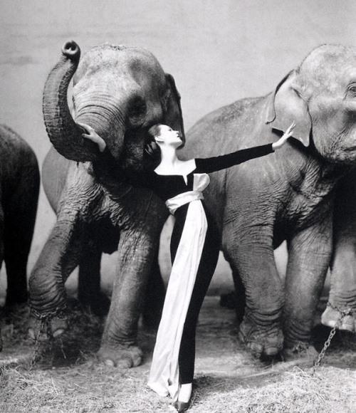 Model Dovima Van Cleef & Elephants 1955