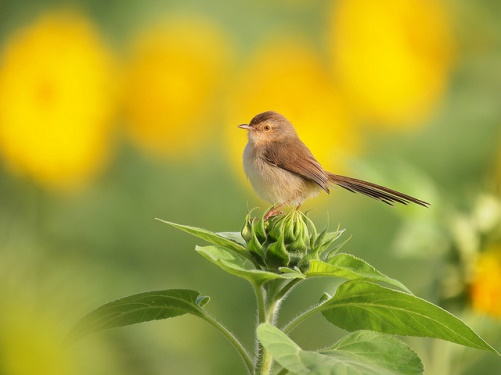 Beautiful birds and flowers by Lucia Lin