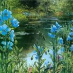 Blue Poppies In Buchart Gardens