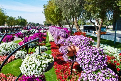 Beautiful Al Ain Paradise flower park in Arab Emirates