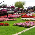 The largest flower park in the world Al Ain Paradise in the United Arab Emirates