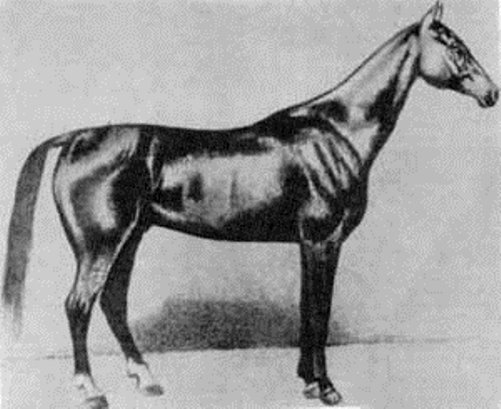 The most famous Akhal-Teke stallion Boynou born in Russia in 1885.