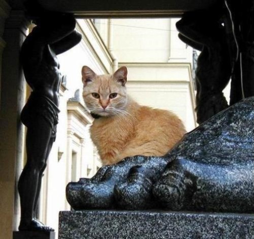 Cats of State Hermitage, St. Petersburg, Russia