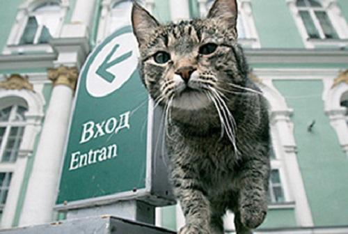 Hermitage cats of St. Petersburg