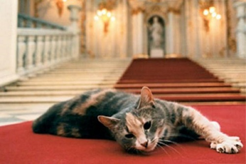 Cats of State Hermitage, St. Petersburg
