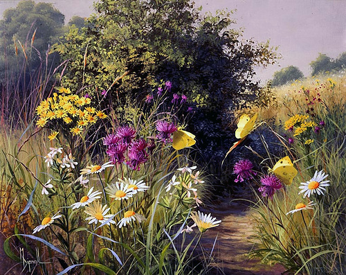 Mary Dipnall Summer wildflowers
