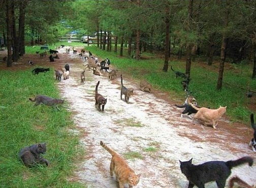 Sanctuary for cats Caboodle Ranch