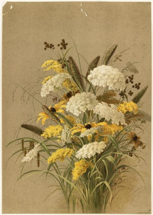 Botanical paintings of Ellen Thayer Fisher