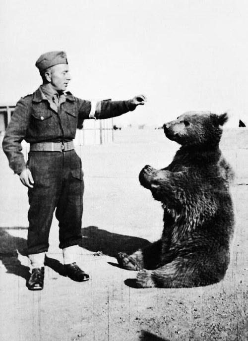 Bear Soldier Wojtek
