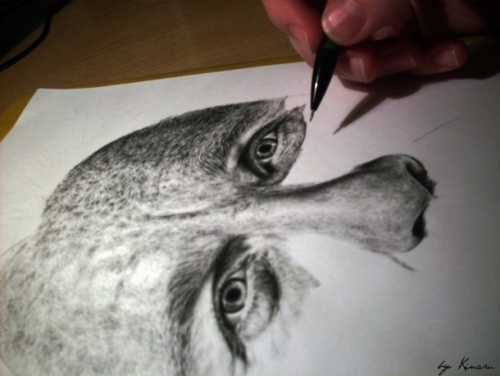 Pencil drawings by Natasha Kinaru