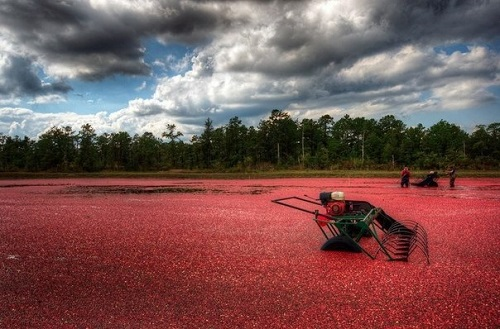 Beautiful Cranberry Sea