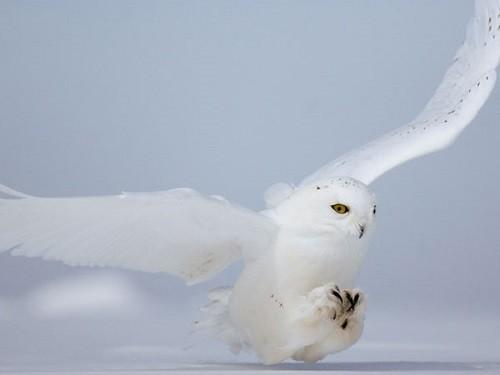 Slavic calendar 2015 White Owl year