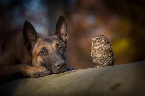 Ingo and Poldi