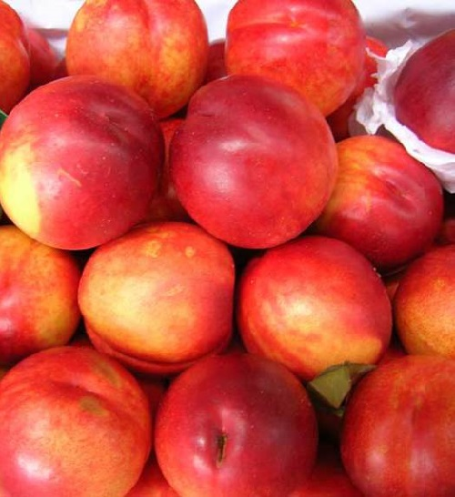 "A nectacotum ""consists"" of equal parts of nectarine, apricot and plum. In appearance it resembles a large nectarine, but its skin is darker – like a plum, and softer – like apricot"