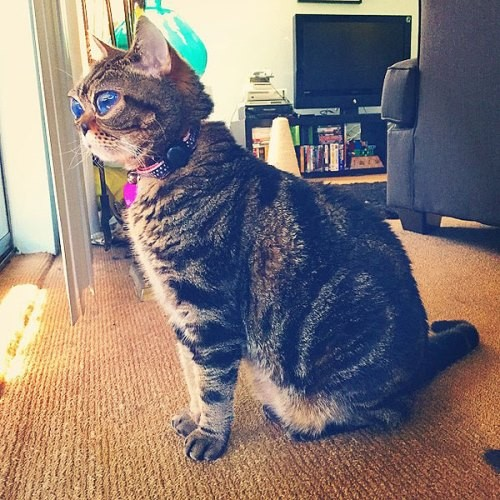 Looking like Alien Cat Matilda