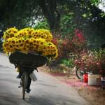 Golden Bicycle Aurumania