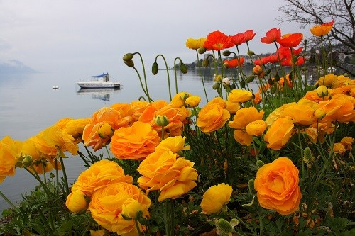 Flower landscape of Lake Geneva in Switzerland